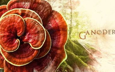 Istoria Ganodermei