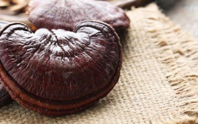 Efectele terapeutice ale ciupercilor